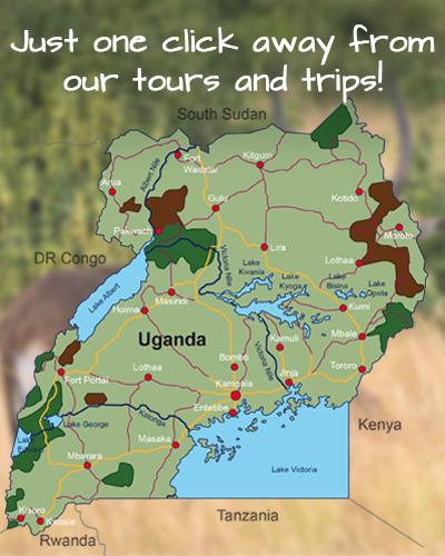 Gorilla trekking Gorilla Tours Safari Uganda Africa Gorilla