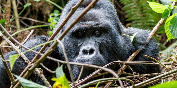 06-7-days-gorillas-chimps-0547