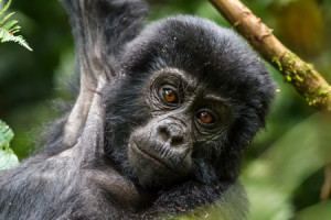 3-days-gorilla-special-overview-450x300px_0655