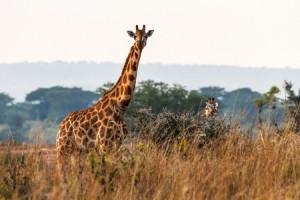Dagomschrijvingen-3 Days Murchison Falls-Day01-450x300px_3502