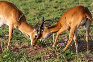 Dagomschrijvingen-3 Days Murchison Falls-Day02-450x300px_3528