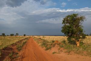 Dagomschrijvingen-3 Days Murchison Falls-Day03-450x300px_6950