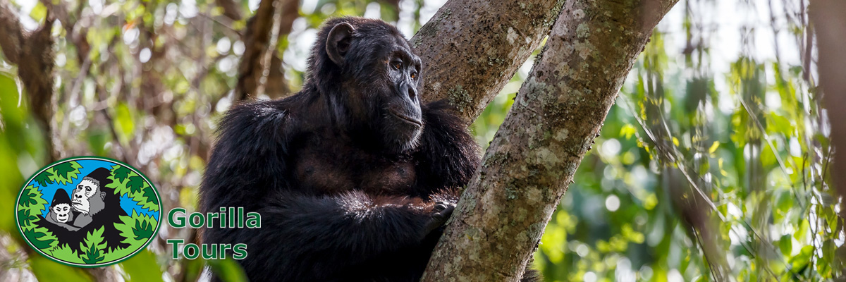 gorillatours_header_3