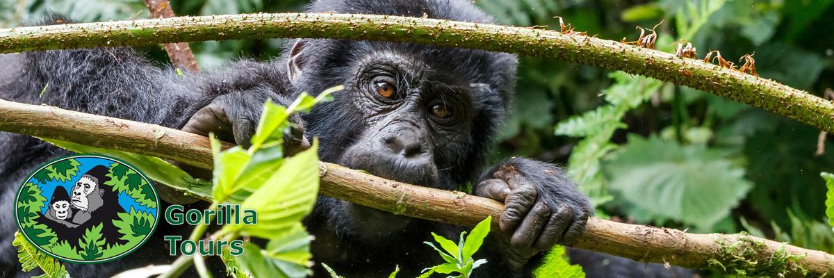 gorillatours_header_9
